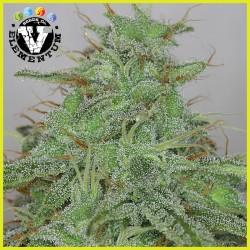 Candy fruit auto